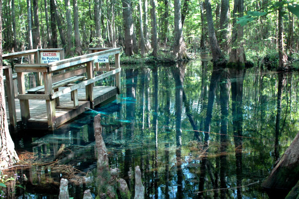 Florida Springs near Gainesville